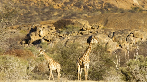 Erongo Mountain Nature Conservancy - Activities